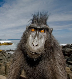 baboon-2362x1569-monkey-cute-animals-funny-md