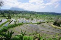 Bali / Tegalalang rice field